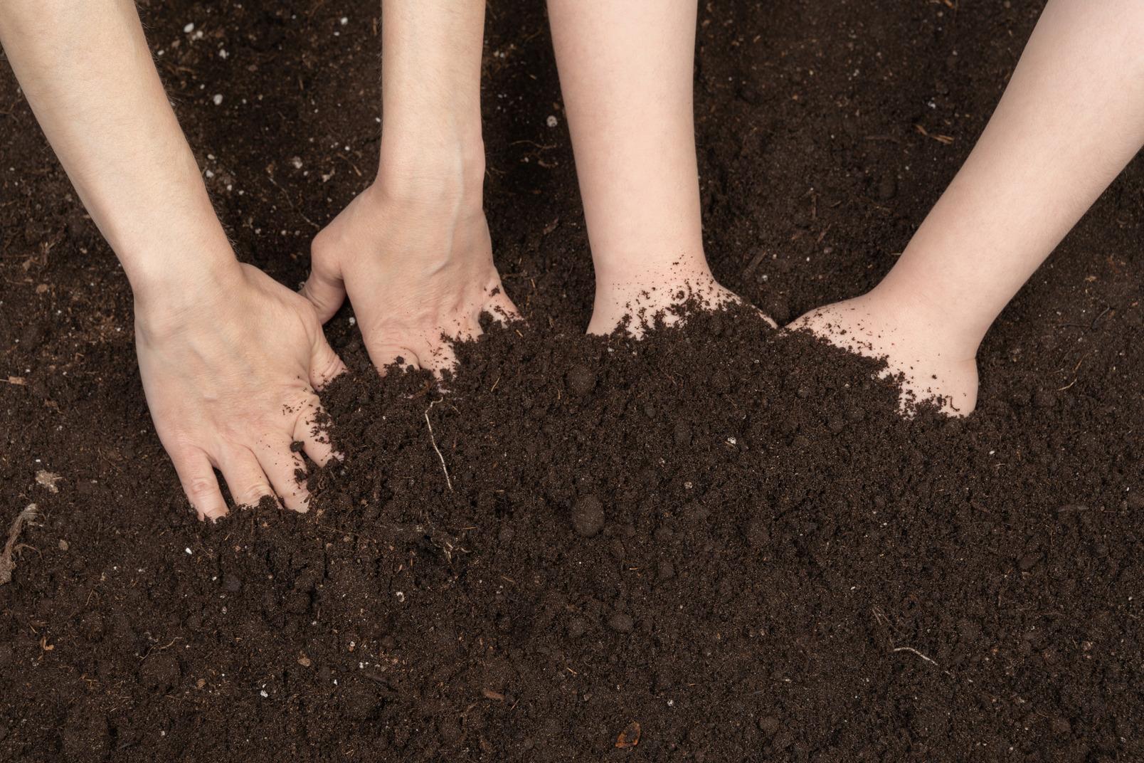 Dirty human hands after gardening