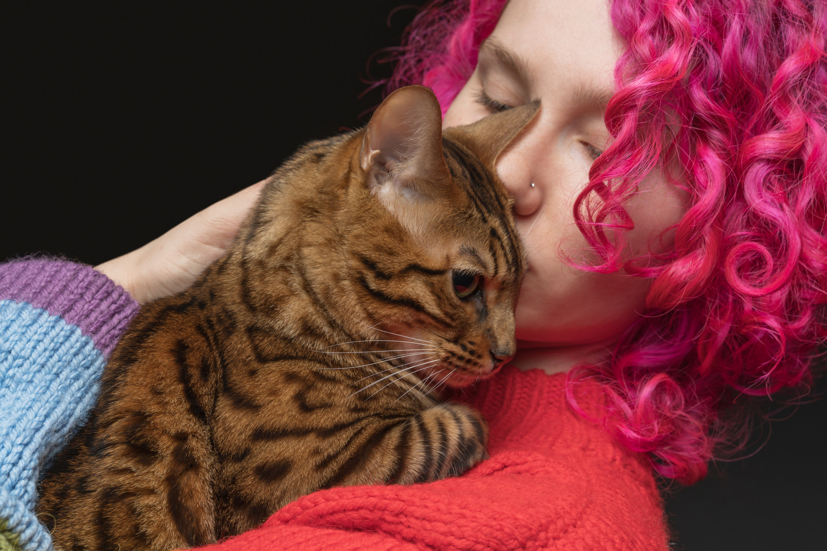 A bengal cat being kissed by its owner